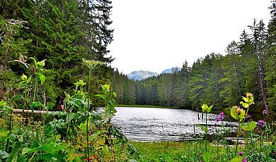 Wanderungen, Bergtouren & Mountainbiken - Waldweiher